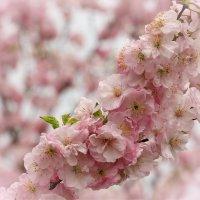 Весна... :: Nyusha