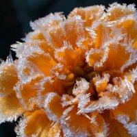 Цветок и изморозь :: Николай Ярёменко