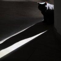 Мышка или MonsterCat 2 :: Татьяна [Sumtime]