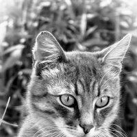 Лов мышей на дому у заказчика.Недорого.)) :: Сергей Горохов