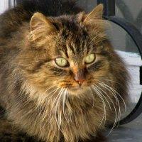 Монастырский кот :: Наталья