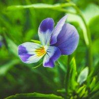 самый лучший друг, цветок :: Света Кондрашова