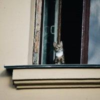 кот в окне :: Smotrikachto SMOTRI