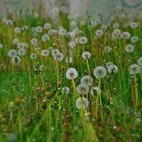 воздушные цветы :: Елена Третьякова