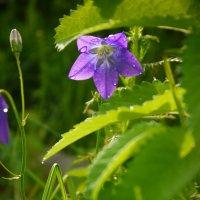 Цветы :: Сергей Бурнышев