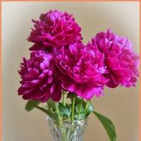 Летние цветы :: юрий Амосов