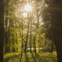 солнечный день :: аннушка