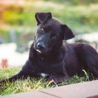 Nice dog :: Yaniya. l