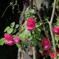 Цветочный хоровод-163. :: Руслан Грицунь