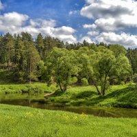 Деревья у реки :: Олег Чернов