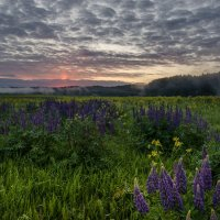 Полевые цветы :: Елена Решетникова