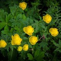 Желтые цветы :: Евгений Кряжев