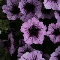 Цветочный хоровод-169. :: Руслан Грицунь