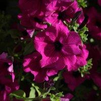 Цветочный хоровод-167. :: Руслан Грицунь