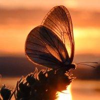 На небе догорали янтари.... :: Нина Штейнбреннер