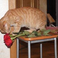 Какой не правильный цветок..... :: Алексей Корнеев