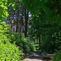 Тропинки в старом парке :: Татьяна Кретова
