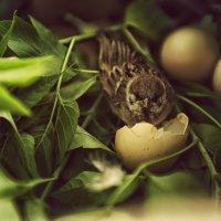 Маленький воробышек! :: Inna Sherstobitova
