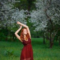 Цветущие вишни :: Ludmila Zinovina