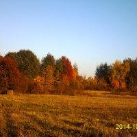 Краски осени :: Vera