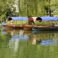 Флотилия озера  Блед :: Николай Танаев