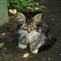 Я нашла в саду котёнка, он мяукал тонко-тонко, он мяукал и дрожал... :: Ольга Кривых