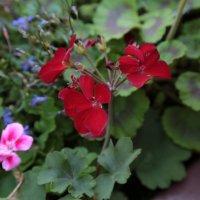 Цветочный хоровод-171. :: Руслан Грицунь