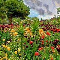 картинки с острова Майнау :: Александр Корчемный