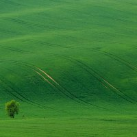 Green velvet :: Vladimir Nedayvoda