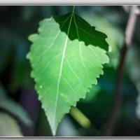 Лист зелёный. :: Александр Лейкум