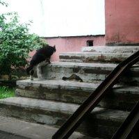 Герой крысиной расы! :: Ольга Кривых