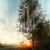 Утра взрыв...... :: Александр Шмалёв