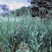 Лесные цветы :: Владимир Немцев