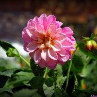Городские цветы-1 :: Андрей Заломленков