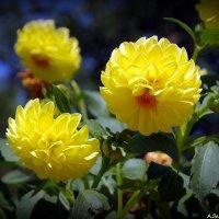 Городские цветы-4 :: Андрей Заломленков