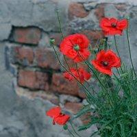 Городские цветы :: Александр Бойко