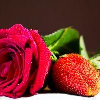 Роза :: Елена