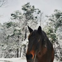 Лошадь-Чайка :: Настя Емельянцева