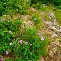 цветы и камни :: Андрей Козлов