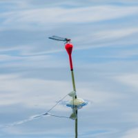 на рыбалке :: Дмитрий Яшин