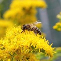 Из жизни насекомых 5 :: Marina K