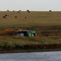 Ходють кони над рекою, ищут кони водопоя.... :: Валерия  Полещикова