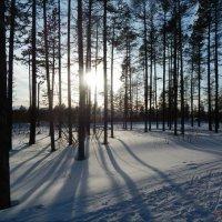 Прогулка на лыжах :: Анастасия Братчикова
