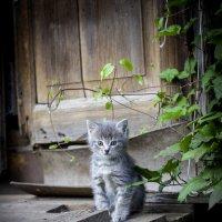 kitty :: Евгений Балакин