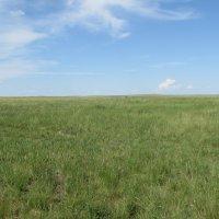 бескрайние просторы казахской степи :: Валерий A.