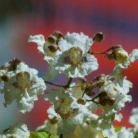 Городские цветы :: Андрей Воробьев