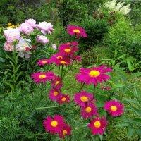 Июньское цветенье :: Светлана Лысенко