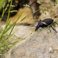 Жужелица и муравей у родника :: Константин Тебеньков