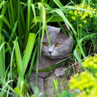 Котя на прогулке :: Александр Кореньков