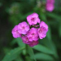 Цветочный хоровод-187. :: Руслан Грицунь